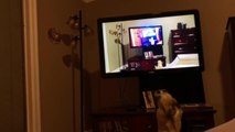 Dog Barks Seeing a Video of Herself Barking on TV