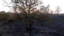 Incendi de la Ribera d'Ebre (1)