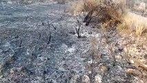 Incendi de la Ribera d'Ebre (2)