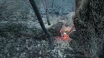Incendi de la Ribera d'Ebre (3)