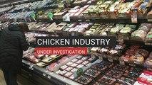 Chicken Industry Under Investigation