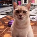"""Cat Finishes Song With """"Meow"""" Following Their Owner"""