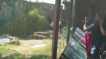 Gorilas y nutrias del Zoo disfrutan de su aperitivo helado