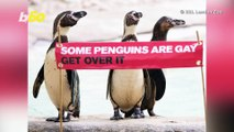 'Some Penguins Are Gay Get Over It': ZSL London  Zoo Celebrates Famous Gay Penguin Pair