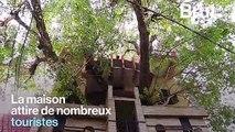 En Inde, une famille bâtit sa maison autour d'un arbre centenaire