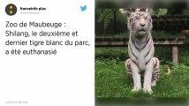 Shilang, le dernier tigre blanc du zoo de Maubeuge, a été euthanasié