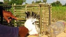 Fantastique Trou Oiseau Piège de Faire De Bambou Et bouteille d'eau