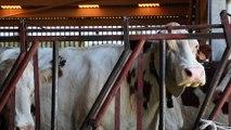 Filière Comté : un modèle agricole pour anticiper le changement climatique
