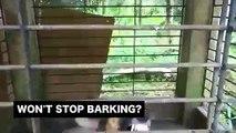 Anti-Barking Dog Repeller Pet Training Ultrasonic Device