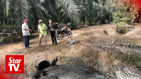 Lumut villagers claim poultry farms contaminating oil palm plantation water supply