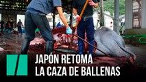 Japón retoma la caza de ballenas 30 años después