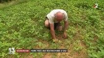Sécheresse : des agriculteurs face aux restrictions d'eau