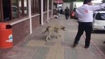 Antalya'da tebessüm ettiren görüntü... Belediye personelinin nezaketi, sokak köpeğini yerinde etti