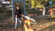 Sokak Hayvanları İçin 'Mahallede Yaşam' Çözümü Aranıyor