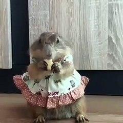 Cette jolie écureuil dans sa robe déguste son goutter. Trop cute !