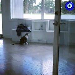 Surpris par sa propre belle voix, regardez la réaction de cette chatte !