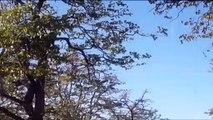 Un léopard réussi à attraper un écureuil volant  en l'air... Saut impressionnant