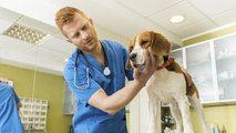 Tratar la gastroenteritis de tu perro en casa