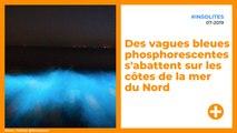 En Belgique et aux Pays-Bas, l'eau devient bleue phosphorescente