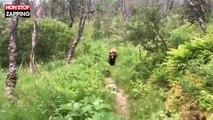 Alaska : Des randonneurs croisent un grizzli sur un chemin (Vidéo)