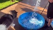 Bain + glaçons, ces chiens sont les plus heureux du monde !
