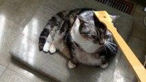 Cat Loves Back Scratcher