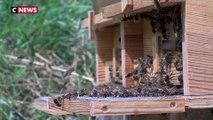 Brignon : un couple de randonneurs attaqué par des milliers d'abeilles