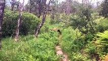 Ces randonneurs croisent un Grizzli à quelques mètres !