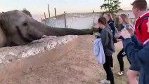 Des touristes s'approchent trop près d'un éléphant