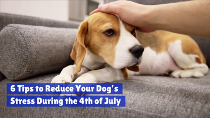 Comfort Your Dog On July 4th