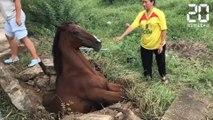 Ils ont tout donné pour sauver ce cheval - Le Rewind du Mercredi 03 Juillet 2019