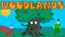 Learn About the Needs of the Tree; Woodland Wildlife - Interesting - Educational Videos for Kids