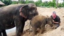 Cet éléphanteau est très joueur... Adorable