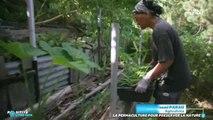 La permaculture pour préserver la nature - Positive Outre-mer (04/07/2019)