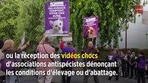 Pourquoi ils votent pour le Parti animaliste