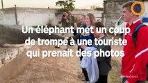 Un éléphant met un coup de trompe à une touriste