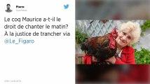 Île d'Oléron : Maurice, le coq qui chante trop fort, devant le tribunal ce jeudi