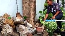 Un crocodile fait des ravages dans la cour d'un particulier