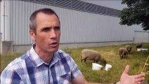 Fabien Vieille-Mecet, technicien travaux énergie chez Préval, parle de l'arrivée des moutons dans l'enceinte de la déchetterie