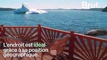 Au Canada, les icebergs deviennent une attraction touristique