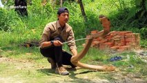 Trainee snake catcher shows off skills at handling enormous king cobra