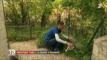 Moustique tigre : 51 départements français envahis