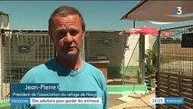 Vacances : la France championne d'Europe des abandons d'animaux
