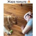 Un jeu très mignon entre un homme et son chien de compagnie !