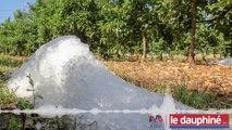 PODCAST « En 10 minutes de grêle, les agriculteurs drômois ont perdu 70 millions d'euros »