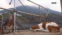 Stromboli : éruption à l'italienne - L'Info du Vrai du 04/07 - CANAL+
