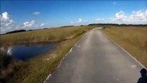 Ce cycliste croit voir un tronc d'arbre sur la route... C'est en fait un joli crocodile