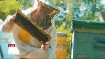 Les abeilles nourries au sirop de betterave