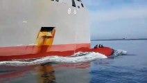 Ces otaries surfent sur la bouée d'un navire