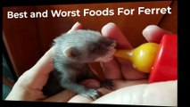 Know about Ferret Food - Which Food to feed your Ferret?